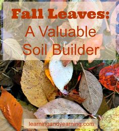 Don't get rid of your fall leaves - they are a valuable soil builder.