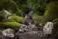 """Taizō-in is well known for its two gardens. The main garden, Motonobu-no-niwa, is a traditional Japanese dry landscape garden (karesansui), containing several angular rocks suggesting the cliffs of the island of Hōrai, with smaller stones suggesting a stream. The planting is mostly evergreen, including camellia, pine, and Japanese umbrella pine. It was designed to integrate a borrowing of scenery (""""shakkei"""") of a view of Narabigaoka Hill in the distance. It is thought to be the final work of…"""