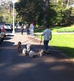 Dog Walker in Golden Gate Park #sanfrancisco