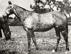 Mah Mahal(1928)(Filly) Gainsborough- Mumtaz Mahal By The Tetrarch. 4x5 To Galopin, 5x5 To Bend Or. 15 Starts 2 Wins 2 Seconds 1 Third. $1,838. Won Witley H. Dam Of Mahmoud(A Top Sire But His Daughters Had A Huge Impact On The Thoroughbred Breed).