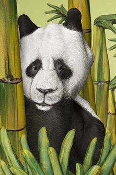 panda painted on a hand by Guido Daniele. Look closely. The bamboo shoots in the foreground are painted fingers! Hand Pictures, Creative Pictures, Weird Pictures, Creative Art, Panda Painting, Hand Painting Art, Art Paintings, Panda Art, Italian Artist