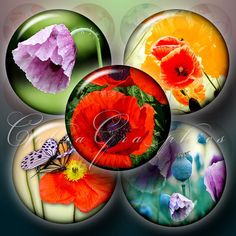Poppy Flowers  2 Digital Collage Sheets CG504  15 by CobraGraphics, $3.60