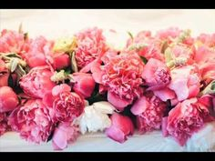 If you are a flower fanatic but new to planting beautiful flowers in your garden, we have a choice selection of 56 summer flowers for you to choose from. Family Flowers, Flowers For You, Summer Flowers, Colorful Flowers, Buy Peonies, Peonies Garden, Pink Peonies, Peony Flower Meaning, Flower Meanings