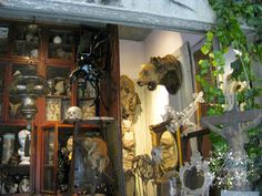 Taxidermy and oddities shop within a flea