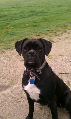 My brothers black boxer!