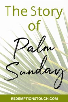 What is Palm Sunday and where does it come from? The story of the first Palm Sunday is told in the book of Matthew. Palm Sunday signifies Jesus' entry into Jerusalem and it it is the beginning of Holy Week. Palm Sunday Story, Palm Sunday Facts, Christian Living, Christian Life, What Is Palm, Hosanna In The Highest, Sunday Prayer, Triumphal Entry, Precious Jesus