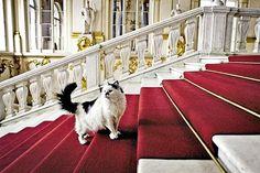 В Эрмитаже живут несколько десятков котов, которых называют нештатными сотрудниками Эрмитажа.
