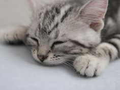 cats and kittens pictures | Cute cat is sleeping