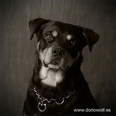 Dady , modelo profesional