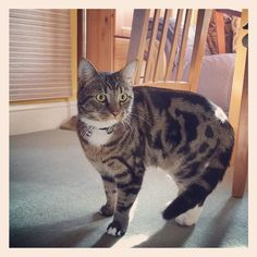 #cats #catstagram #catsagram #catsinstagram #scarycat #catslovers #tabbycat
