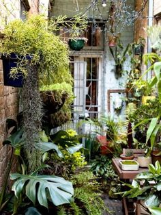 Urban Garden Design David Whitworth — The Design Files Small Courtyard Gardens, Small Courtyards, Back Gardens, Small Gardens, Indoor Courtyard, City Gardens, Indoor Garden, Small Cottage Garden Ideas, Garden Cottage