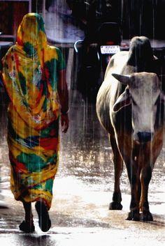 Woman & Cow In The Rain / Bundi, India / 2015