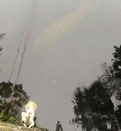 This manatee protected a dog who got stuck in a river. | 19 Facts That Prove Animals Have Souls
