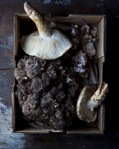 White Matsutake/Tricholoma magnivelare, Hen of the Woods/Maitake/Grifola frondosa, white clusters, Snow Shrimp/Entaloma