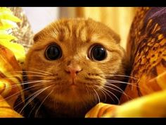 Приколы с котами - ТОПовая подборка! - YouTube