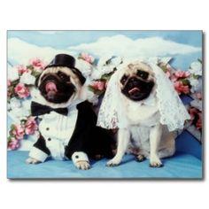 Mops verfolgt Hochzeits-Postkarte