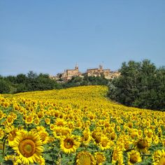 Montedinove (Ascoli Piceno) Marche Italy, by annota, http://www.flickr.com/photos/annotta/