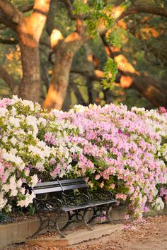 Azalea Haven, Park Bench, White Point Gardens, Charleston SC