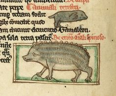 This hedgehog SIMPLY CAN'T with the mole flying above it. | 44 Medieval Beasts That Cannot Even Handle It Right Now