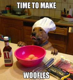 *Woofles* THAT IS TOO DANG CREATIVE