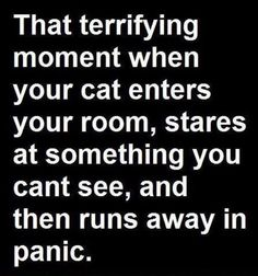 That terrifying moment when your cat enters your room stares at something you cant see and then runs away in panic | Crazy & Sarcastic