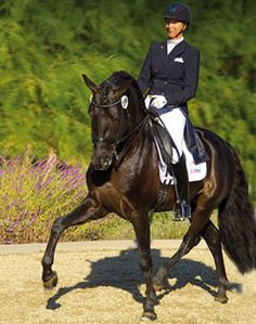 Sabine Schut-Kery aboard Marques XXXVI - PRE stallion.  USDF Prix St. Georges Horse of the Year (2013).  Marques (Selecto VI X Airoso XXVI) is a 2004 approved PRE stallion bred by Alba Vargas from strong Escalera performance bloodlines.  Owned by Rhea Scott, she imported him from Epona Equestrian Center in the south of Spain.