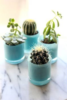 Indoor Succulents | Perpetually Chic