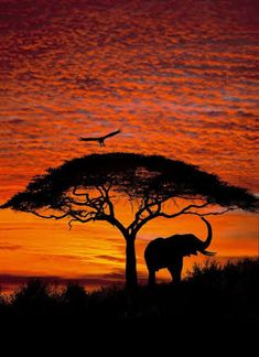 african sunset - Google Search