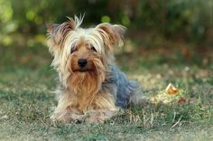 Little Timmy by Gerry_Pics, via Flickr