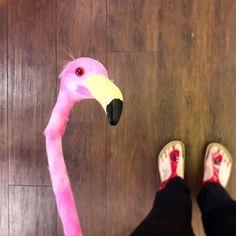 ...I got photobombed by a flamingo yesterday... . . . #photobomb #flamingo #ootd