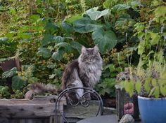 kavezacc macska csiga ellen 01