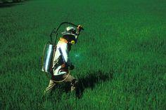 Un mélange d'huile de colza, d'huile de soja, d'huile de coton et d'huile d'olive serait particulièrement efficace pour lutter contre les insectes nuisibles...