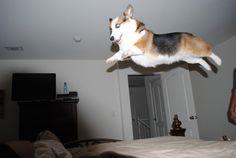 New yoga pose: Levitating dog.