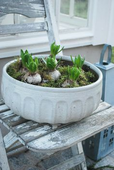 Bulbs and moss.