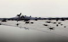 Spiders fleeing floods en masse in Australia. They've nearly covered the barb wire in web.