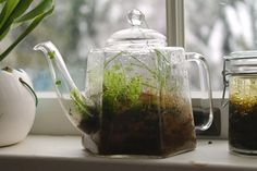 In the terrarium are mosses, grasses, rocks, and clovers. One clover decided to sprout through the spout.