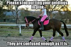 LOL! I love my confused gelding, but his color is black or red,white, and blue thank you very much