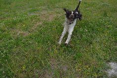 Gårdstunet Hundepensjonat: Skjønne hunder på tunet :-)