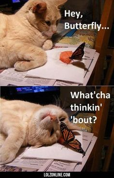Butterfly Meets Curious Cat | Follow @gwylio0148 or visit http://gwyl.io/ for more diy/kids/pets videos