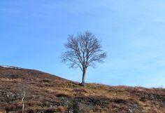 I am not a tree