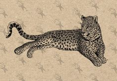Digital Backdrops, Digital Collage, Tiger Sketch, Leopard Tattoos, Wall Art Prints, Fine Art Prints, Drawing Clipart, Printable Pictures, Cat Tattoo