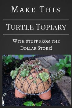 Succulent Turtle Topiary...these are the BEST DIY Garden Ideas!