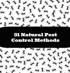 31 Natural Pest Control Methods