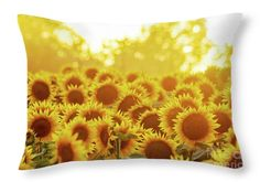 Throw Pillow by Kevin Anderson The setting sun turns the trees yellow behind this field of large commercial sunflowers grown for oil production on the Grinter Farm's field in Leavenworth Co Kansas, that looks like a sea of sunflower heads. This field attracts thousands each year for photo ops and to take in their golden beauty.