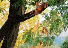 September in #DownsviewPark, #Toronto, #Canada