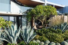 Garden Landscape Design, Garden Landscaping, Questions To Ask, This Or That Questions, Garden Maintenance, Construction Services, Exotic Plants, Master Plan, Design Process