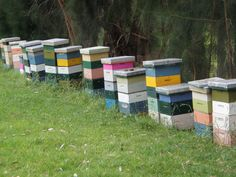 New Zealand beekeepers and bees hard at work, collecting nectar from the flower of the tea tree bush, that will yield manuka honey for you and your family... #manuka_honey #buy_manuka_honey #manuka_honey_usa Manuka Honey Uses, Bee Keeping, Tea Tree, Bees, New Zealand, Skin Care, Usa, Flower, Skincare Routine