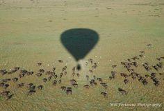 Morning Balloon Ride,Governor's Camp Masai Mara, Kenya
