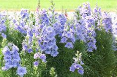 Gardenplaza - Außergewöhnliches Saatgut ermöglicht harmonische Beetkreationen - Farbsymphonie für Freizeitgärtner