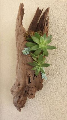Succulent outdoor wall garden ideas – Famous Last Words